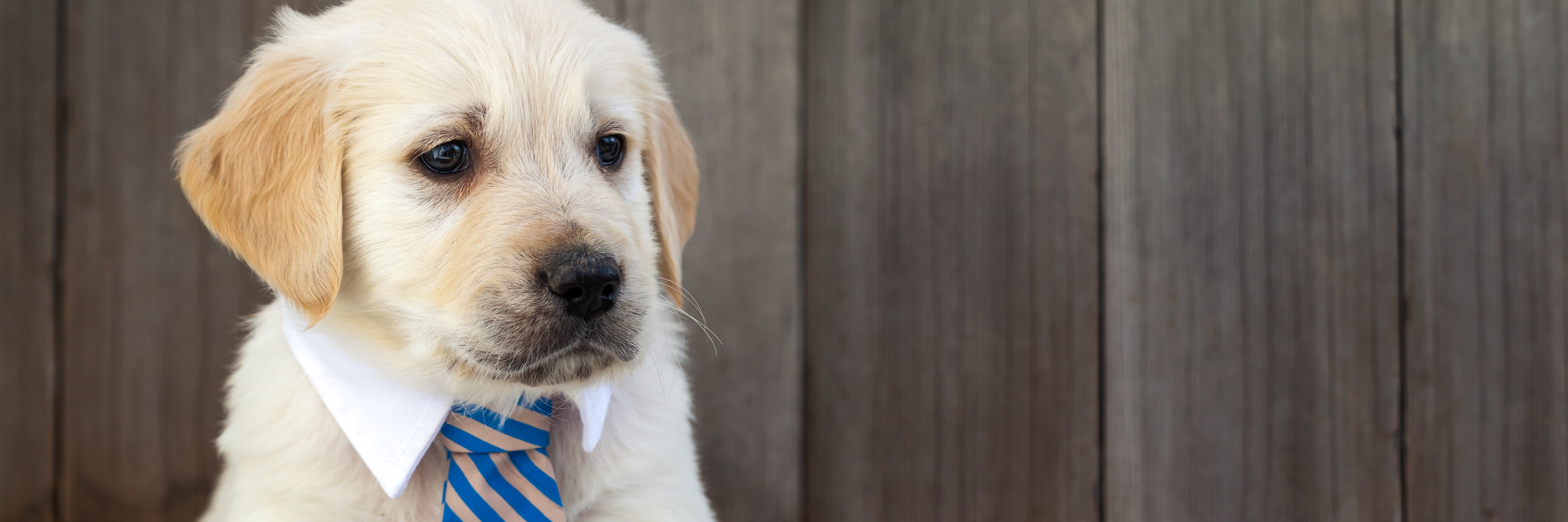 Cute puppy wearing a tie illustrates story on what my dog taught me about feelings | healthcare news | Primaris