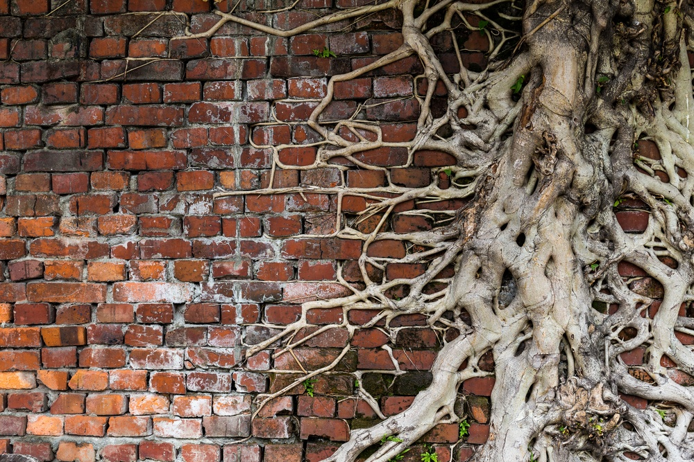 Tree root on red brick wall.jpeg